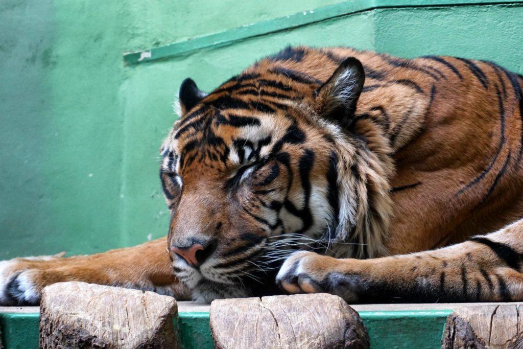 Prag Zoo